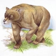 Праисторическа мечка