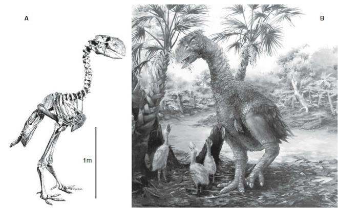 Праисторически гигантски птици
