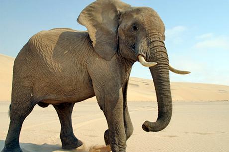 Слонът