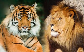 тигърът