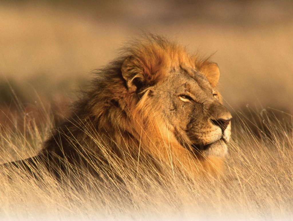 Лъвът